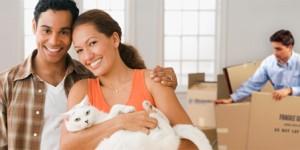 Nghề chuyển nhà là nghề làm dâu trăm họ